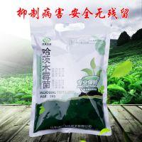 厂家直供山东绿陇生物哈茨木霉菌高效防治真菌病害,杀菌广谱效果显著