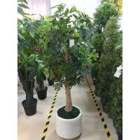 7月份广州天昆厂家供应一批新款仿真植物上市受到大众一致好评