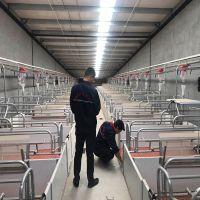 全套养猪设备 饲养设备 现代化自动饲养料线 育肥猪料线正红养殖
