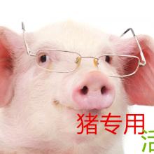 治疗母猪便秘的饲料添加剂母猪益生菌
