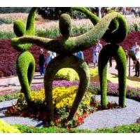 新园五色草观叶立体造型-人物001