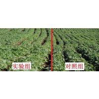 全国供应生物治理土传病害防治菌剂提高土壤有机质