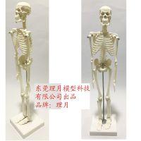 现货人体脊椎骨骼白色骨架45CM全身模型股骨正骨练习教学颈椎关节