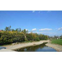 珠海园林工程绿化养护
