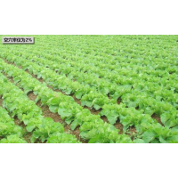 手推式蔬菜播种机 播种深度可调节萝卜白菜播种机