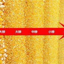 邦腾玉米制糁机 四道风网除尘 商用玉米加工成套设备