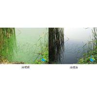 """要想治理""""水癌""""蓝绿藻就要先了解它出现的原因"""