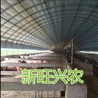 新旺兴农种植大棚8117养殖大棚生产厂家