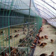 圈地围栏网 养鸡防护网 绿色铁丝护栏网现货
