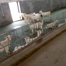 圈养羊羊棚建设高架床 养羊用的漏粪板 羊漏粪板图片