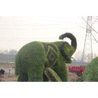 新园五色草观叶立体造型-大象