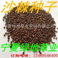 批发林木中药材种子【沙棘种子】固沙耐旱 量大从优 新货