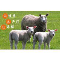 前期发情母羊喂什么饲料好 适用于繁殖母羊的饲料
