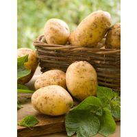 土豆农家自种新鲜现挖现卖非转基因放心菜 山药