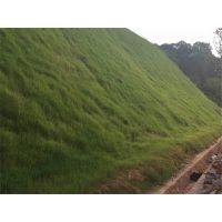 云南大理州生态复绿要用什么草种急
