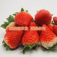 红花草莓苗种苗_拉萨红花草莓苗_乾纳瑞农业科技