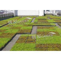 供应屋顶绿化储水花盆 平面屋顶 鞋面屋顶经久耐用