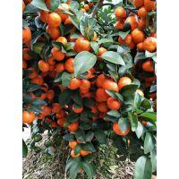 膨果钾宝腐殖酸水溶肥 瓜类果树必备肥料膨果坐果