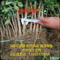 http://himg.china.cn/1/4_620_236290_750_750.jpg