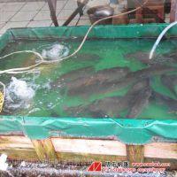 高级蓄水池 定做帆布池 绿色涂层布加工 定做环保游泳池