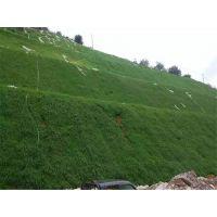 云南玉溪边坡复绿专用草籽草种灌木种子