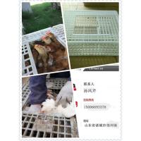 新疆鸡鸭专用周转筐 兔子运输笼 塑料大鸡笼子 土鸡运输筐厂家