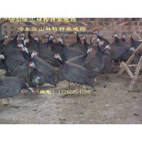 黑河珍珠鸡养殖场佳木斯珍珠鸡养殖场鸡西珍珠鸡养殖场