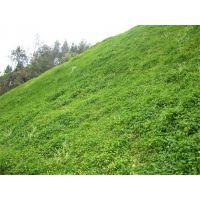 云南省普洱市专卖绿化草种批发的地方在哪里