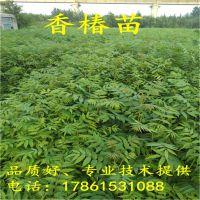 http://himg.china.cn/1/4_636_235098_800_800.jpg