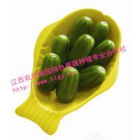 欢乐果园水果黄瓜种子 小孩都爱吃 营养水果蔬菜
