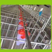 养猪料线全自动料线 备 母猪料线 猪场专用设备