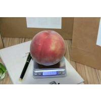 陆王仙桃树苗一棵价格、陆王仙桃苗多少钱一株