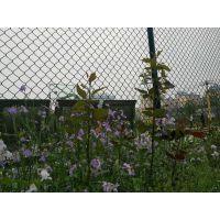 勾花厂家直销矿用养殖勾花体育球场围网栏 学校操场勾花隔离栅
