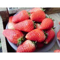 红颜草莓苗 大棚草莓苗 组培脱毒草莓苗 无病害