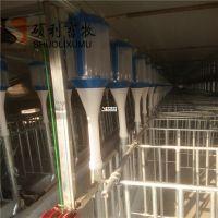 养猪自动喂料线的主要优势母猪定量杯喂料定位栏饲喂系统