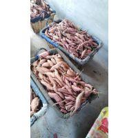 烟台市神索种植专业合作社大量对外批发烤地瓜 蜜薯 烟薯25专业烧烤型红薯番薯