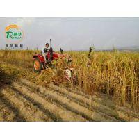 拖拉机带割晒机 芦苇收获割晒机 自动打捆收割机