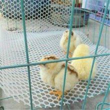 白色养殖塑料网 养鸡育雏网 塑料平网现货
