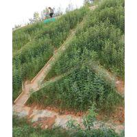 重庆公路边坡绿化滑坡生态修复绿化选用什么草籽灌木种子呢