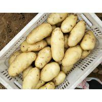 山东土豆价格便宜 黄心土豆大量批发