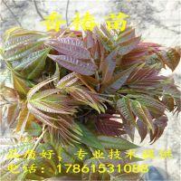 http://himg.china.cn/1/4_650_236844_800_800.jpg