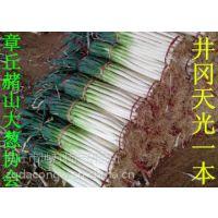日本铁杆大葱种子 高产新品种 井冈一本 日本大葱种子 井冈晚抽 天光 冬越 长宝 日本钢葱种子