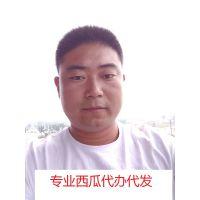 山东青州西瓜价格15153715701刘进