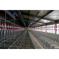 利祥农牧养猪设备厂直营养猪自动料线