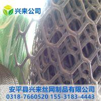 纯白色小孔塑料网 透明育雏网 塑料平网批发市场