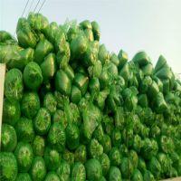 厂家供应2针绿色盖土网 遮阳盖土网