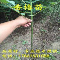 http://himg.china.cn/1/4_663_236118_800_800.jpg