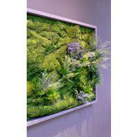 室内软装绿植搭配墙面绿化设计室内植物墙