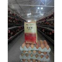 鸡吃什么下蛋多 鸡多下蛋秘方偏方 鸡蛋下降怎么办 谊鑫白金肽