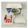 厂家直销 西马特罗Elisa检测试剂盒/西马特罗酶联免疫试剂盒96T YS-E-CIM 精迈